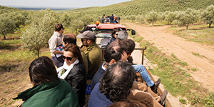 Lusosem associa-se a dia de campo que mostra modelo produtivo inovador em olival e amendoal